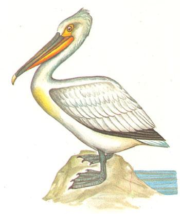 Водоплавающие птицы находятся на суше